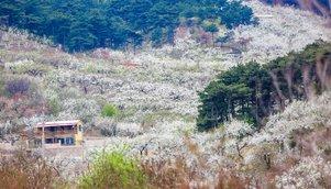 4月21日(周三)鞍山梨花-渔掌门一日休闲摄影活动